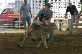 Person helping a child ride a sheep
