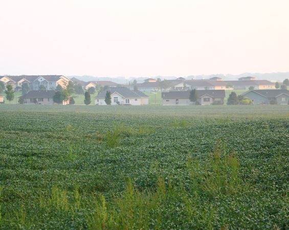 Soybean field and houses